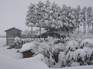20100101_雪景色.jpg