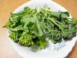 20100301_07_茎ブロッコリーと菜の花.JPG