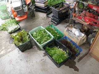 20100509_01_野菜セット出荷.jpg