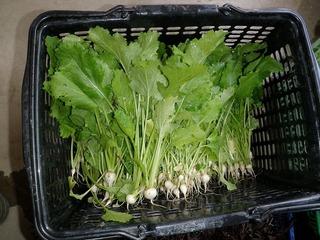 20100509_03_野菜セット出荷.jpg