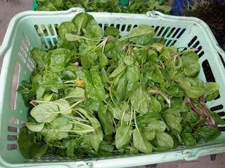 20100509_06_野菜セット出荷.jpg