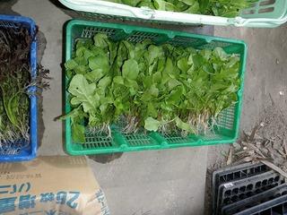 20100509_07_野菜セット出荷.jpg