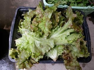 20100509_08_野菜セット出荷.jpg