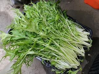 20100509_10_野菜セット出荷.jpg