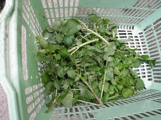 20100509_11_野菜セット出荷.jpg