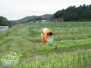 20100523_01_収穫.jpg