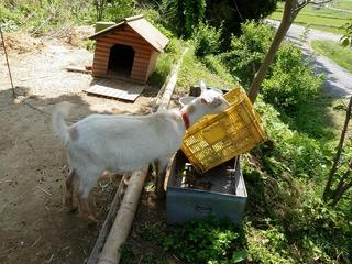 20100617_03_ぼくの農場.jpg