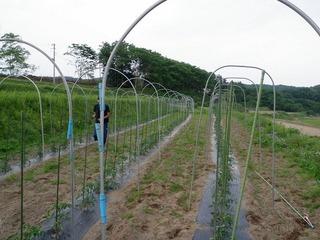 20100617_05_ぼくの農場.jpg