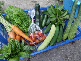 20100806_01野菜セット.jpg
