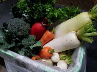 20101123_02_野菜セット.jpg