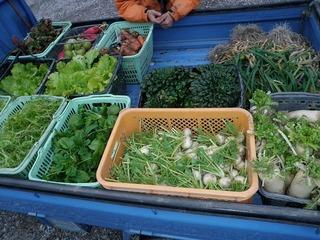 20100211_01_野菜収穫.jpg