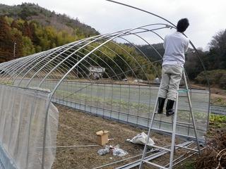 20100211_02_ビニルハウス建設.jpg