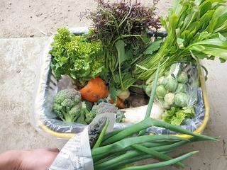 20100226_01_野菜セット.jpg
