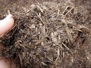 20100515_02_炭素循環農法見学.jpg