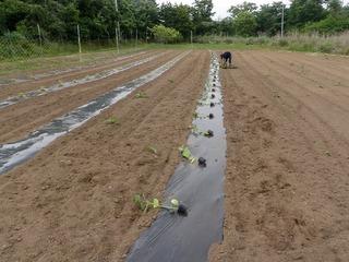 20100617_04_ぼくの農場.jpg